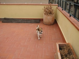 Bodie Exploring the Roof Terrace, Barcelona