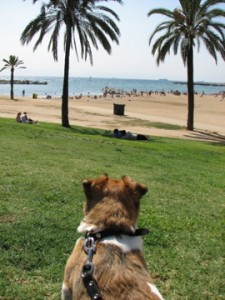 Bodie at the Beach, Barcelona