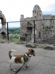 Bodie the dog at a castle in Poland