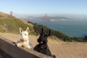 Boone and Kenzie in San Francisco