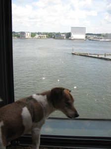 Bodie enjoying the view in Amsterdam