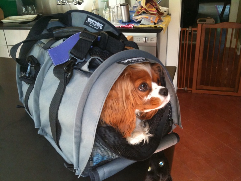 Dog Jaunt Guest Post: 5 Tips for choosing the right pet carrier